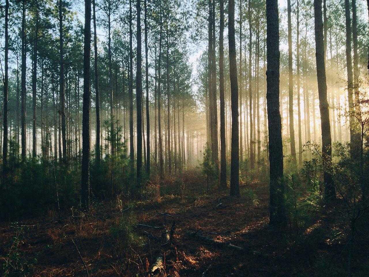 wysypisko w lesie