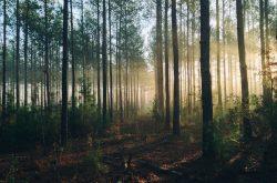 Dzikie wysypiska śmieci – ogromny problem zaśmiecania lasów